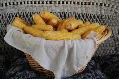freezing corn 1